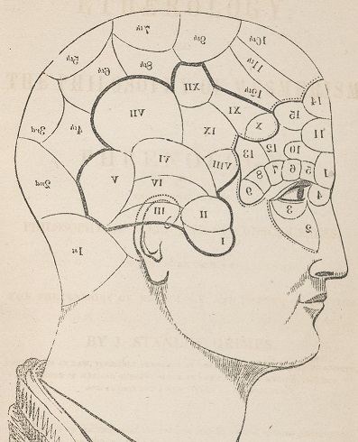 Phrenological bust