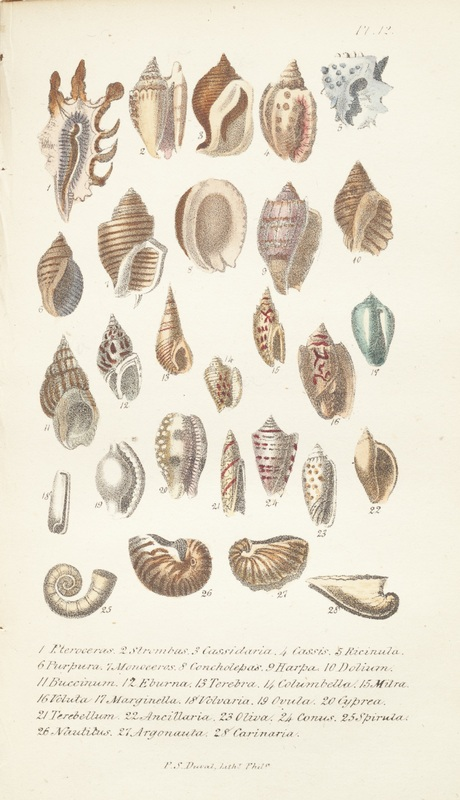 Plate of illustrations